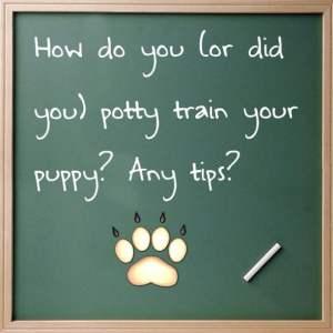 Dog Potty Training Blues :(