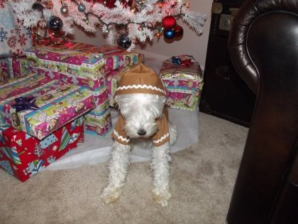 Pet Holiday Clothes
