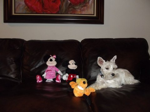 PetSmart Mickey and Minnie Disney Products