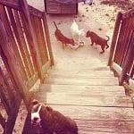 Blog Paws Blog Hop: Wordless Wednesday – Furiends Furever