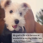 The Best Dog Quotes