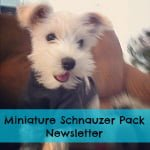 It's Official! I'm the Pack Leader for Miniature Schnauzers on PackLove.com!