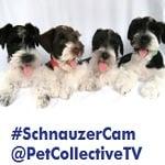 Cutie Cams – Live Puppy Cams!