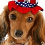 8 Ways to Keep Your Dog Safe on the 4th of July