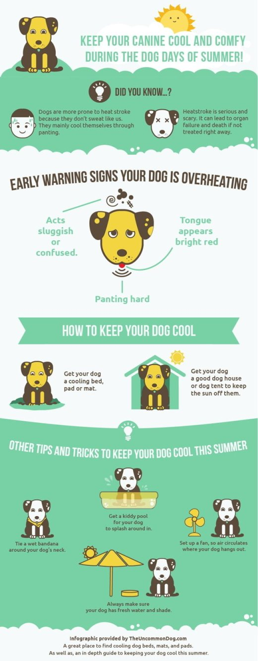 How To Get Your Dog To Give You His Paw