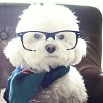 Fashion Friday: Nickel – THE Hipster Dog