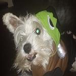 Halloween with Martha Stewart Pets!