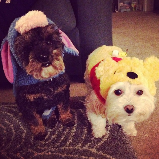 Featured Furiends: Halloween Edition!