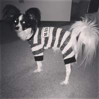 Featured Furiends: Halloween Edition! - Come Wag Along