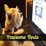 Pawsome Find: A Doggy Halloween!