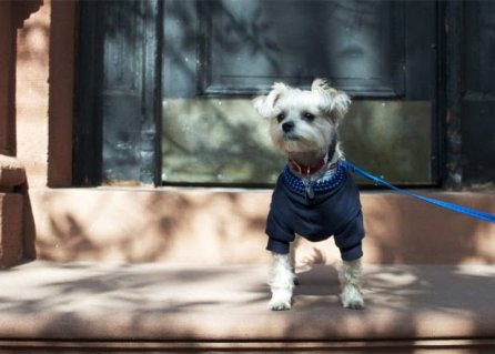 Minnie In Manhattan - cute dog pictures