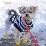 Fashion Friday:  Minnie in Manhattan