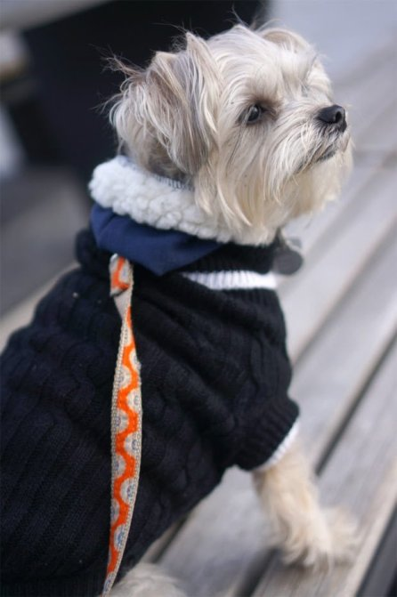 Minnie In Manhattan - dog model
