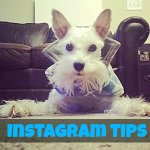 Instagram Tips: How to Use Popular #Hashtags On Instagram