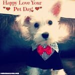 Happy Love Your Pet Day! #LoveYourPetDay #PCPups