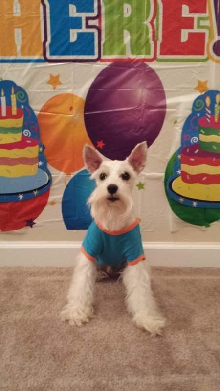 Simba Birthday - Birthday Boy