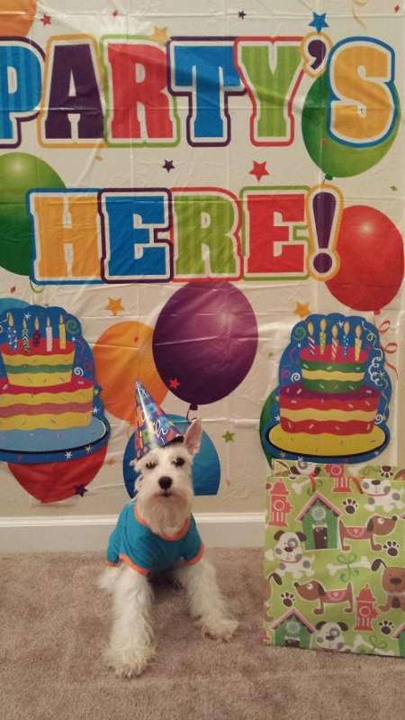 Simba Birthday - Partys Here - Dog Birthday Hat