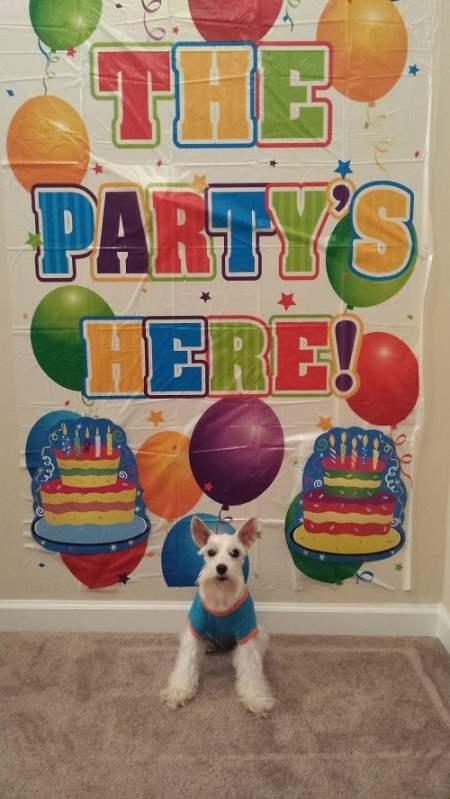 Simba Birthday - The Partys Here