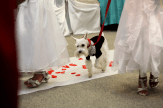 Doesn't Simba look dapper walking down the aisle like he owns it?
