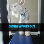 Come Wag Along YouTube: Simba Works Out