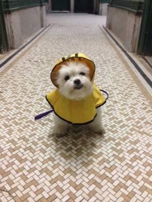When it rains, it pours. But I'm always prepared!