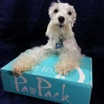 BlogPaws Blog Hop: Wordless Wednesday – #PawPack Please!