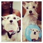 BlogPaws Blog Hop: Wordless Wednesday – Pridebites Custom Dog Toys