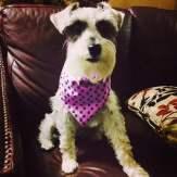 I love my doggie bandannas.