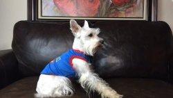 Pic-Pet Cam Dog Alert