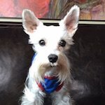 Pic-Pet Camera App Review & Giveaway