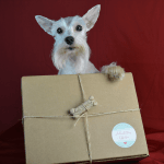 #PawPalsWithAnnie Dog Subscription Gift Box Review + Coupon Code #Ad