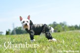 Check out our review of Theo Dog Fashion - Dog Hoodie and Pants on ComeWagAlong.com!