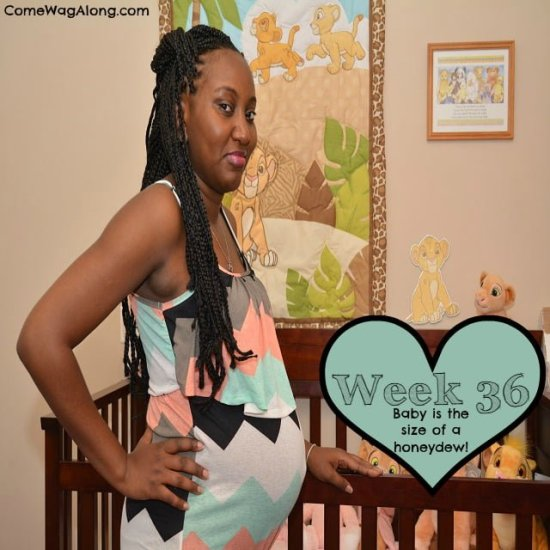 baby bump week 36
