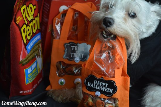 Halloween treat bag for dogs