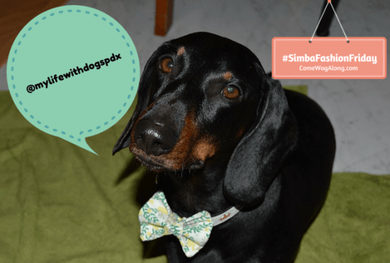 Simba Fashion Friday - Walter The Doxie
