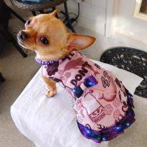 Wheels the Tiny Chihuahua - dog dress