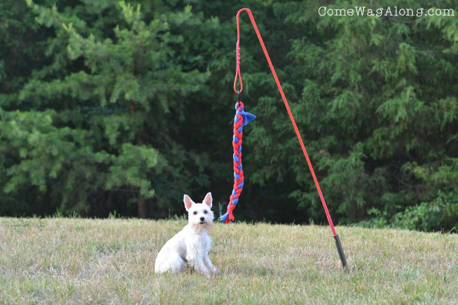 Tether Tug Dog Toy Outside