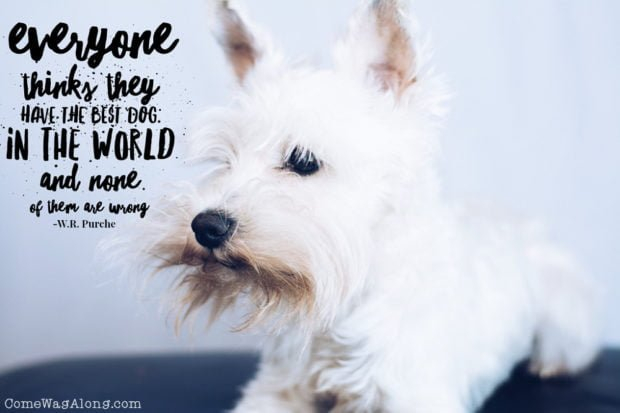 """""""Everyone thinks they have the best dog in the world and none of them are wrong"""" - ComeWagAlong.com"""