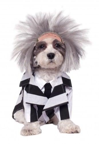 Beetlejuice Dog Halloween Costume