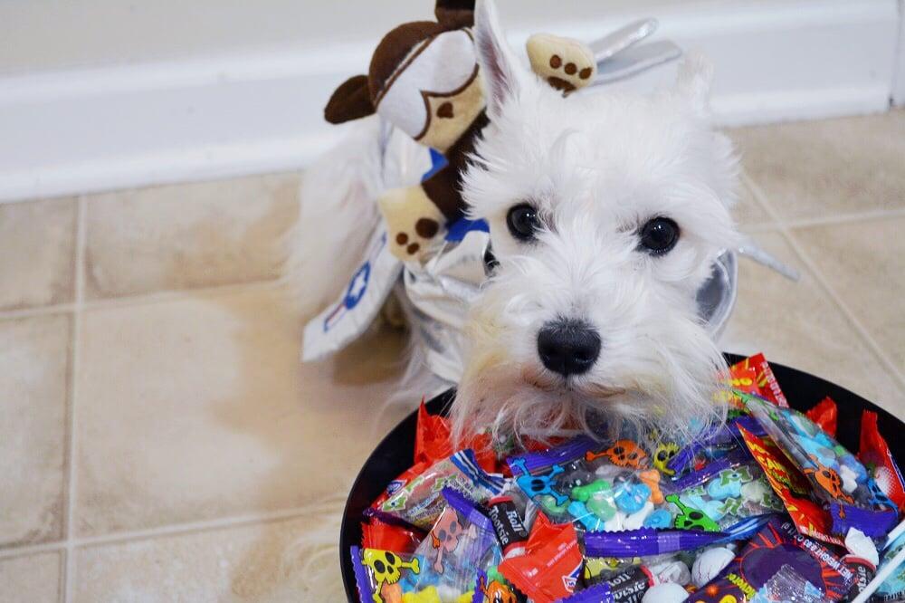 10 Dog Halloween Costume Ideas