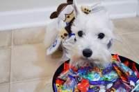 10 Dog Halloween Costume Ideas - Come Wag Along
