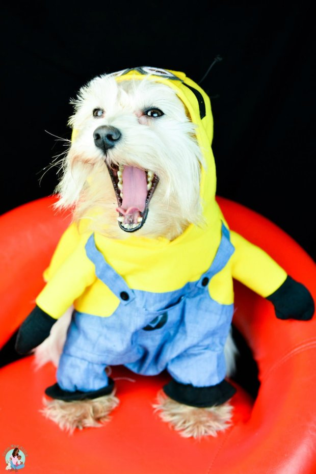 Silly Minion Dog Costume
