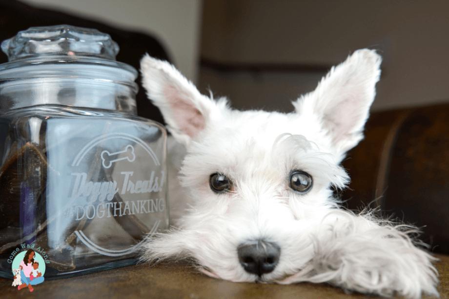dogthanking