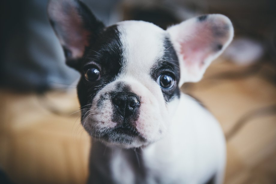 how to potty train your puppy - puppy apartment