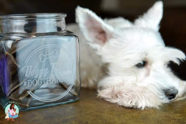 Best Dog Treats - ComeWagAlong.com
