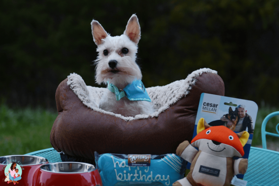 Celebrating My Dog's 5th Birthday! - ComeWagAlong.com