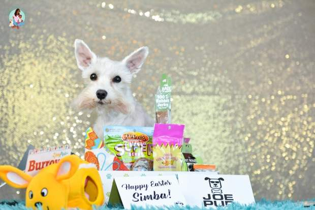 Joe Pup Monthly Dog Subscription box - ComeWagAlong.com