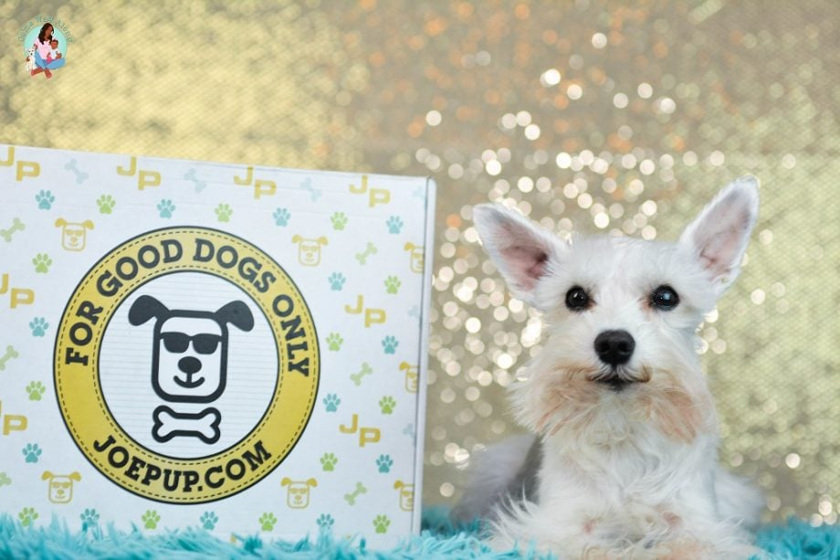 Joe Pup Monthly Gift Box for Dogs Unboxing - ComeWagAlong.com
