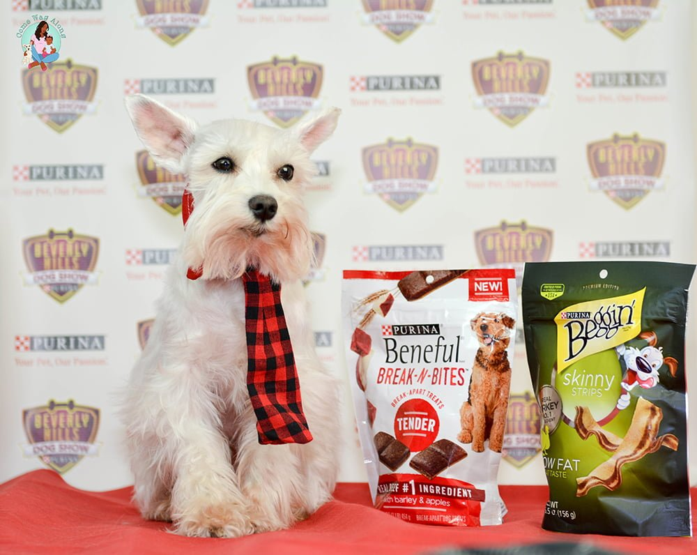 Purina dog treats every dog is a star campaign come wag along beverly hills dog show presented by purina comewagalong publicscrutiny Image collections