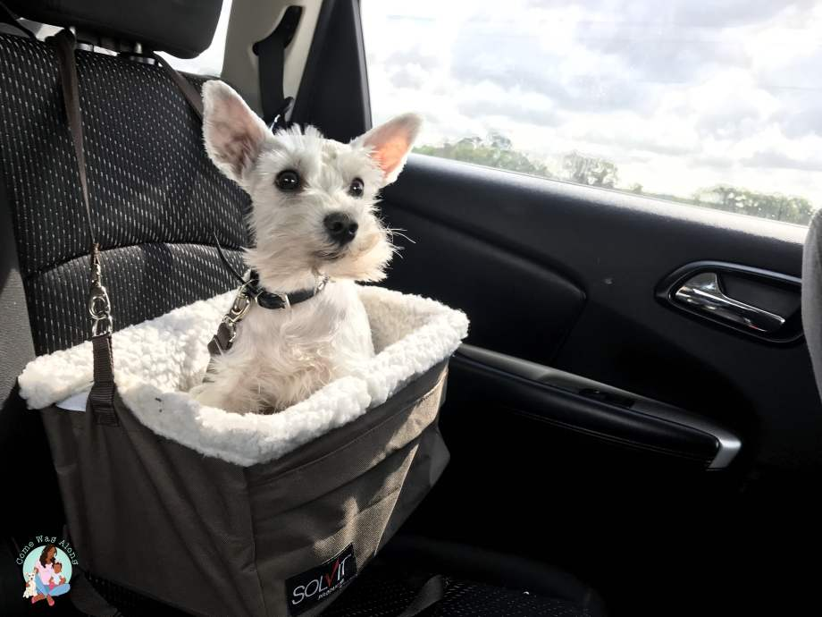 Traveling to BlogPaws Conference